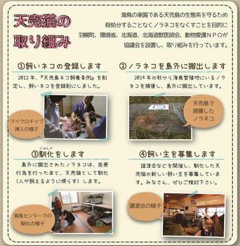 天売3.JPG